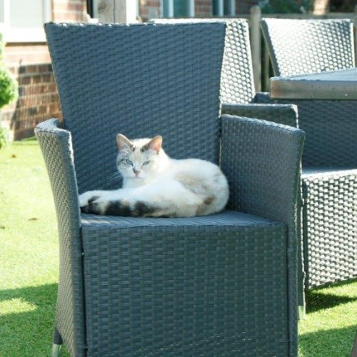 The Foxby Hill Care Home Cat